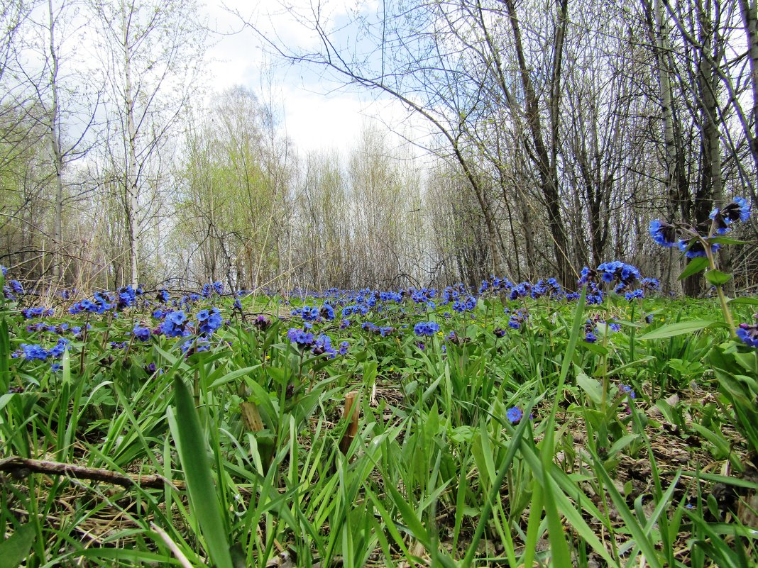 Весна - Galaelina ***