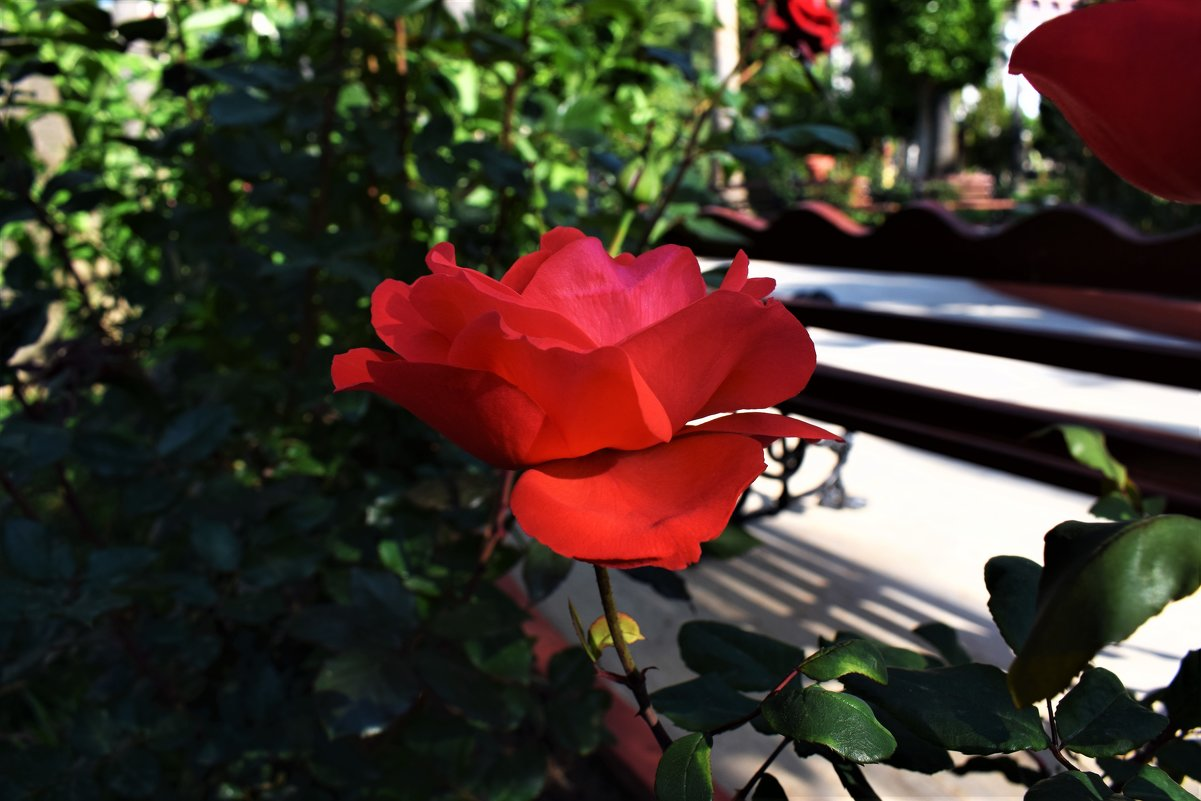Прекрасная красная - Марина