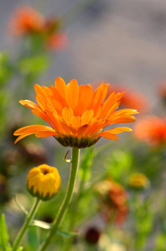 Оранжевое солнышко - Татьяна Соловьева