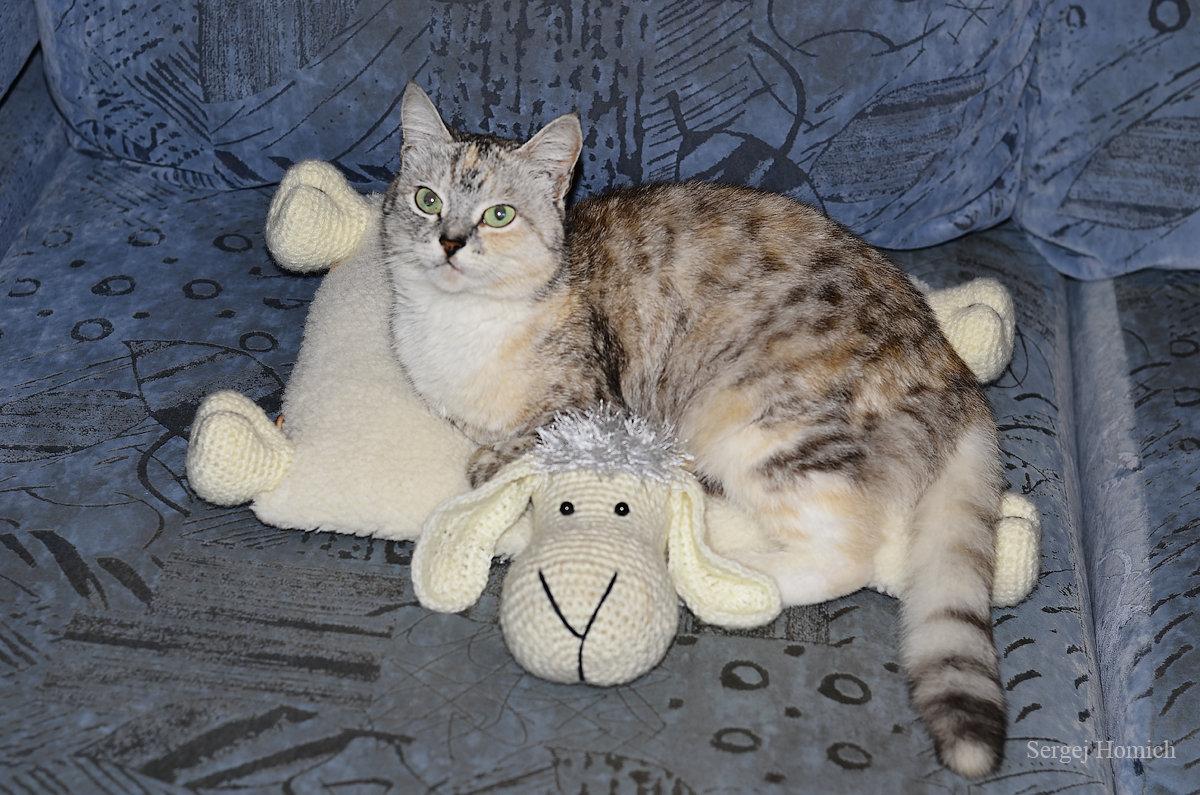 Ксюша облюбовала новую подушку - Сергей и Ирина Хомич