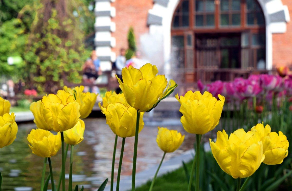 Жёлтые тюльпаны встречают при входе! - Татьяна Помогалова