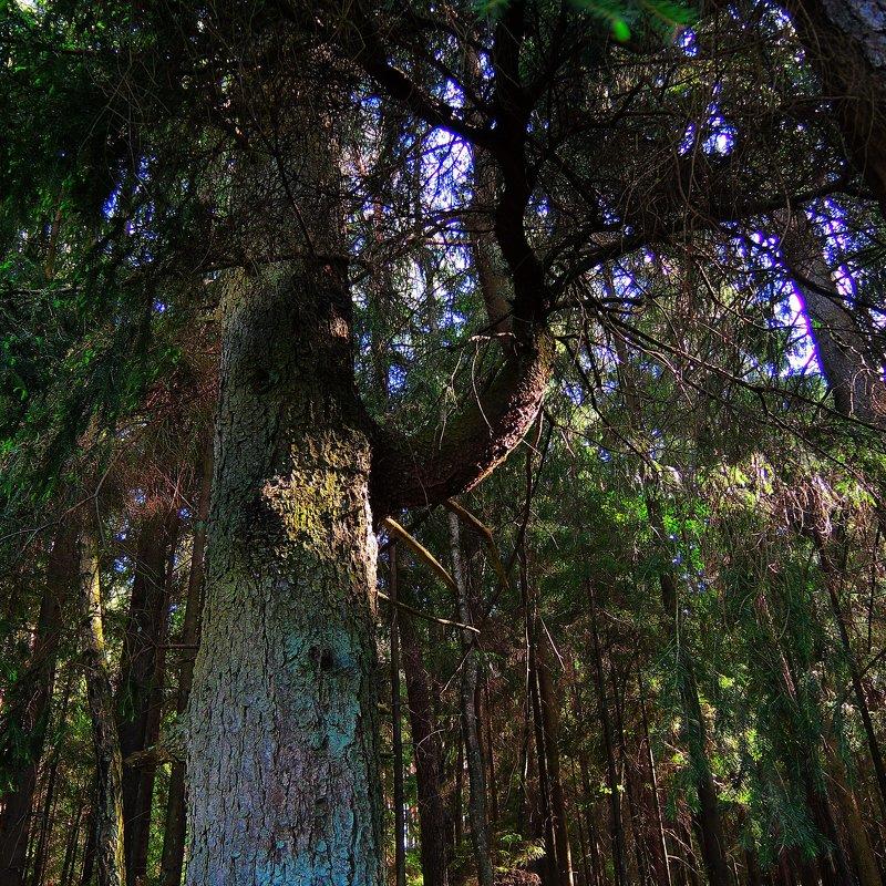 В лесу - Александр Сапунов