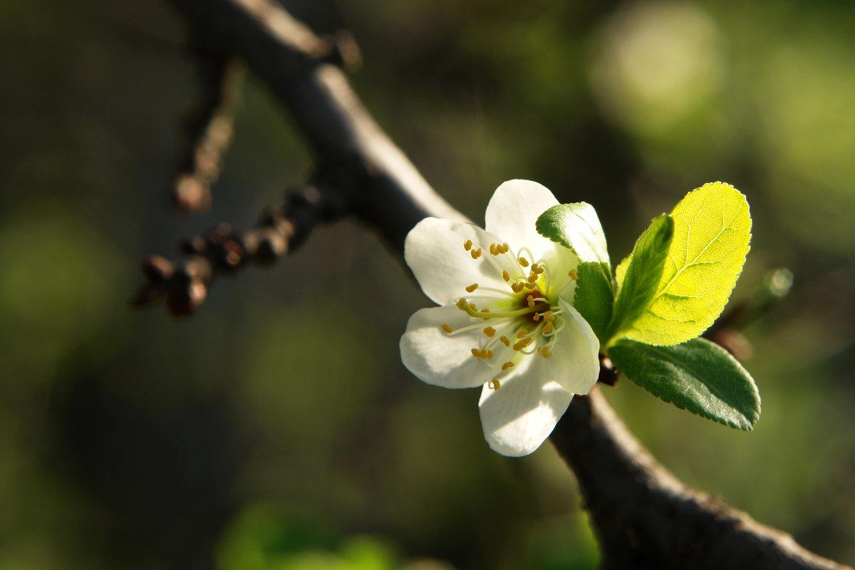 Очарование весны - Ирина
