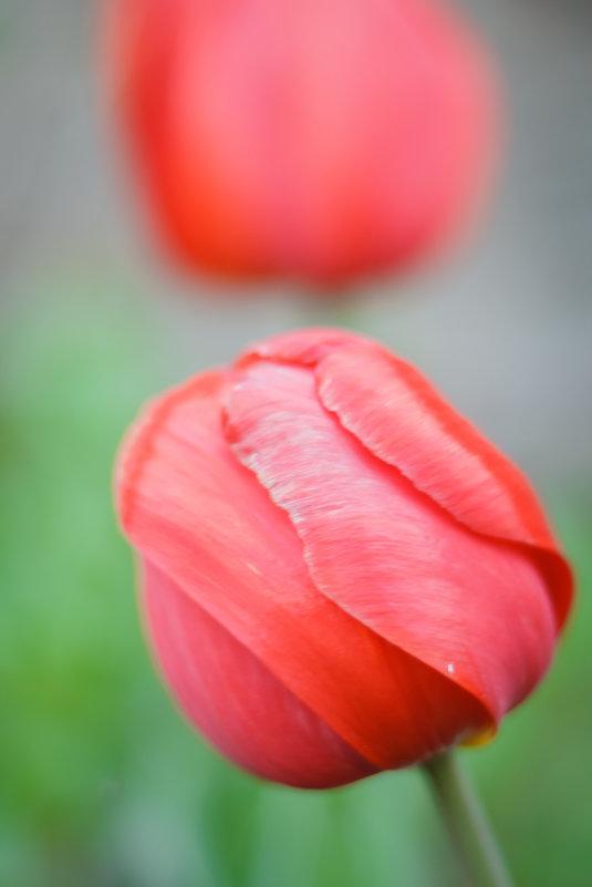 Весенние цветы - Альбина Хасаншина