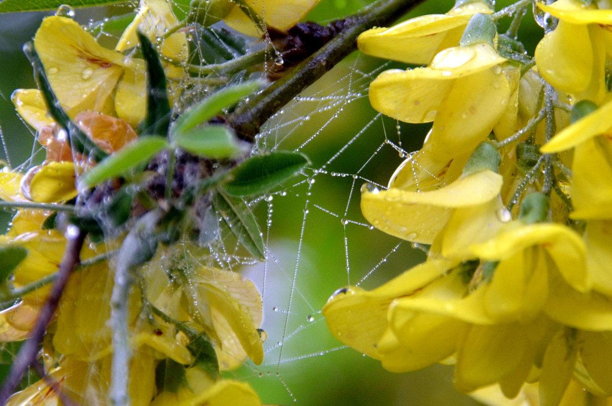 Хрустальные паутинки дождя - Ольга Голубева