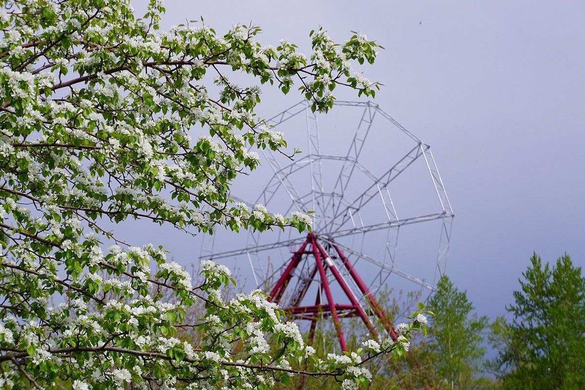 Колесо обозрения в ветвях яблони. - Nikolay Svetin