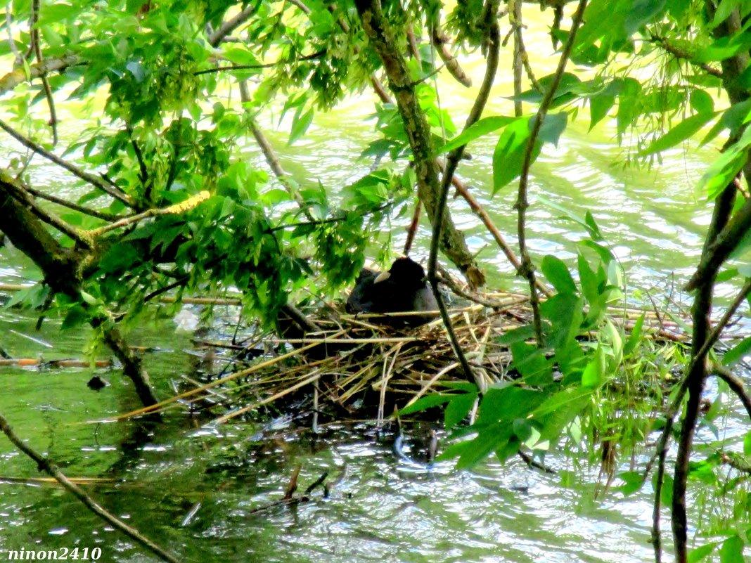 Среди ветвей, среди воды - Нина Бутко