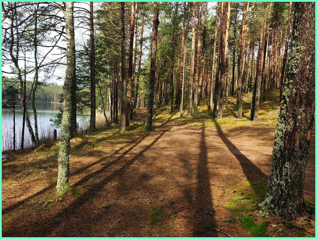 Утро в сосновом лесу... - Николай Дони