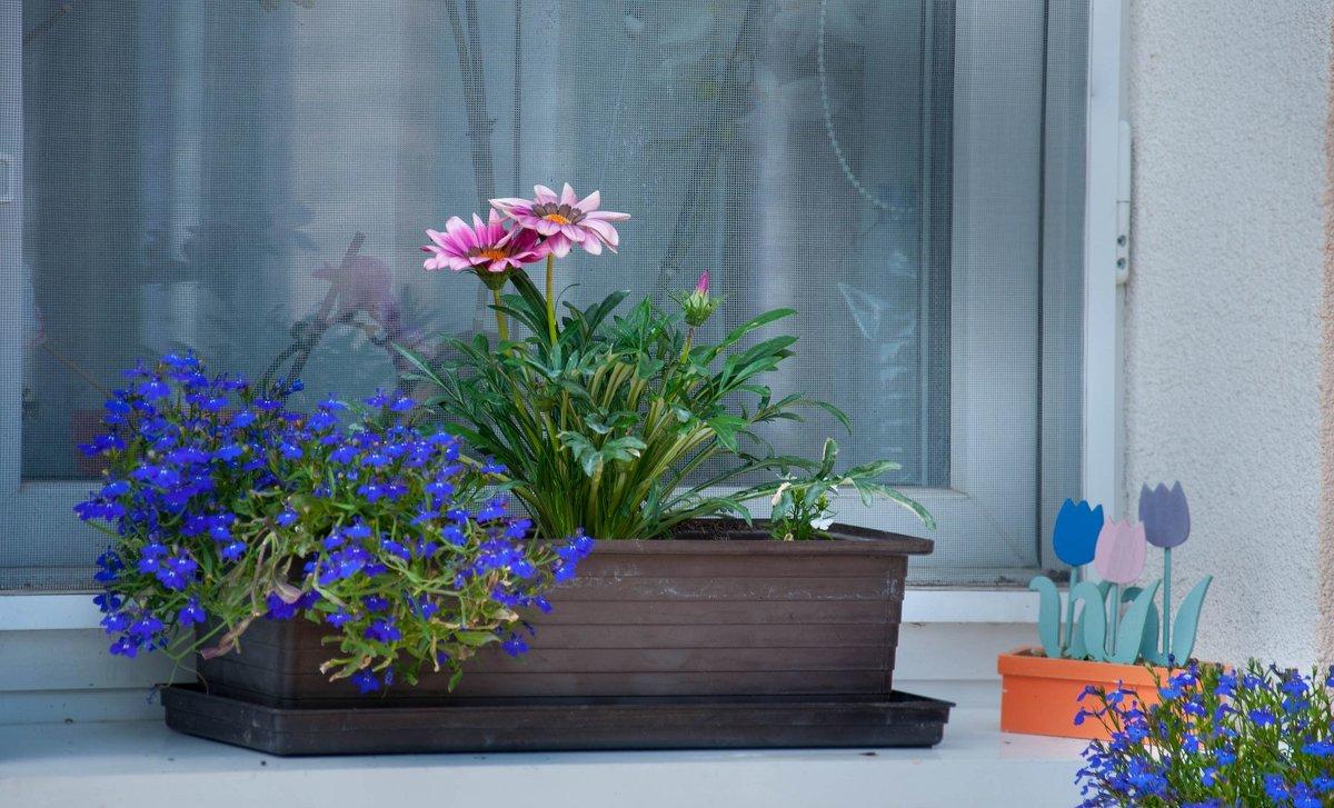 Цветы на подоконнике - Андрей ТOMА©