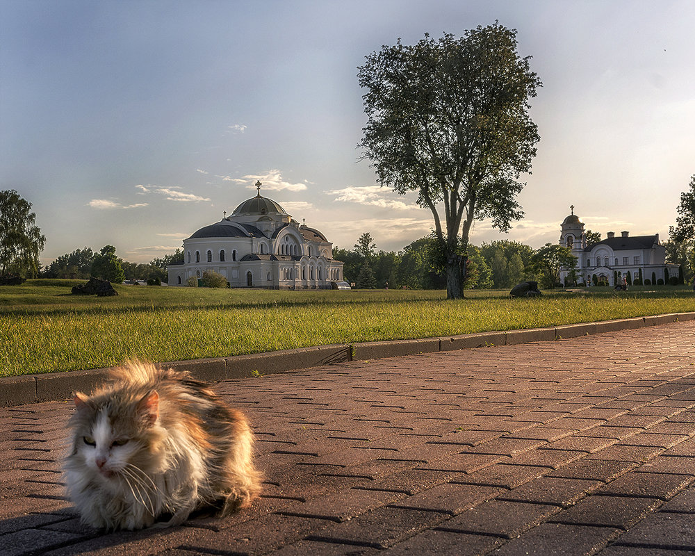 Просто кот... - Валерий Чернов
