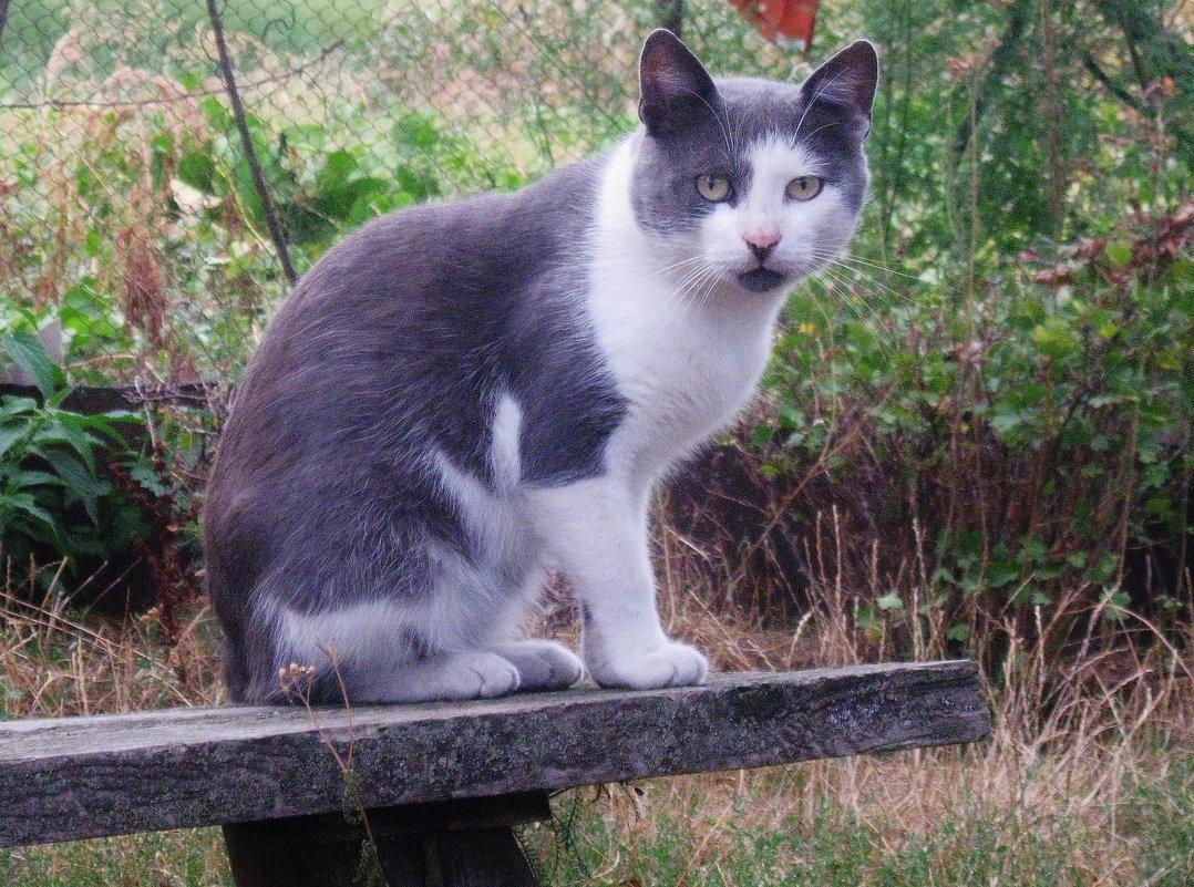 Кошка домашняя - sav-al-v Савченко