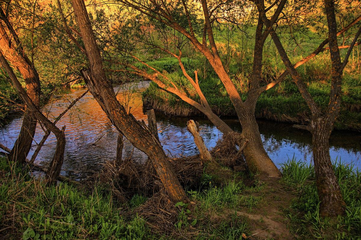 В вечернем свете, нависая над речкой - Владимир Макаров