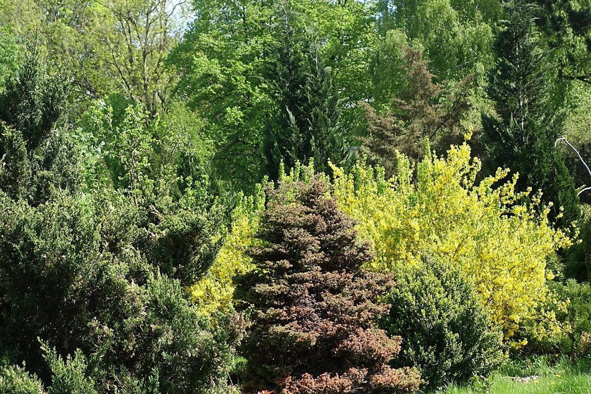 Уголок Ботанического сада - Маргарита Батырева