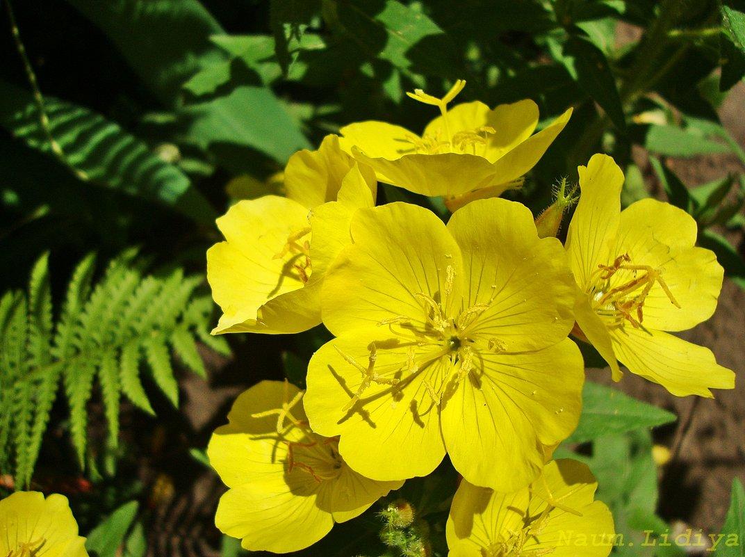 Яркость желтого - Лидия (naum.lidiya)