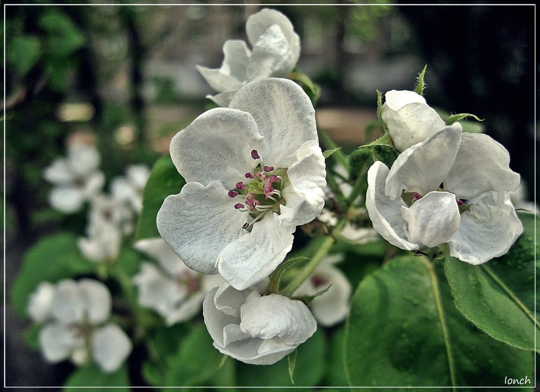 Весна в городе - muh5257