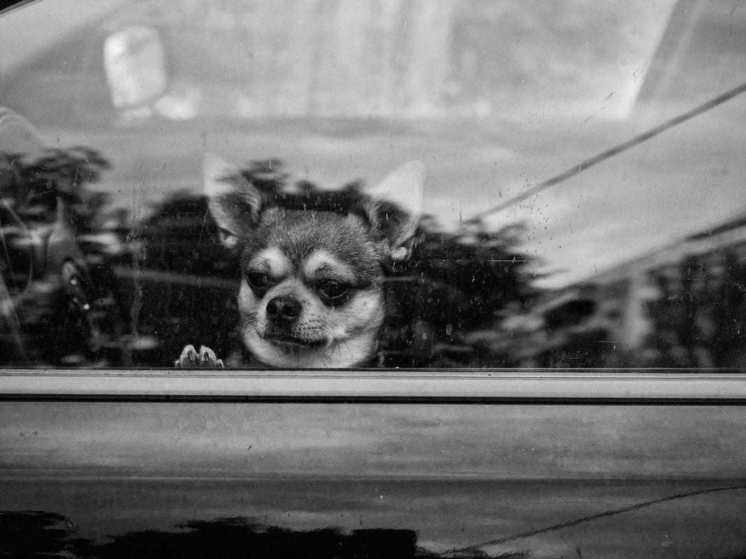 Один в машине - 2 - Вадим