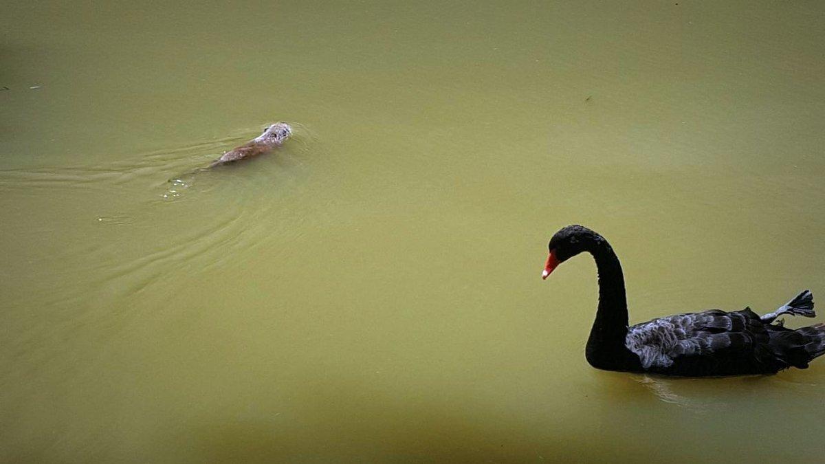 Совместное проживание в пруду. - Мила Бовкун
