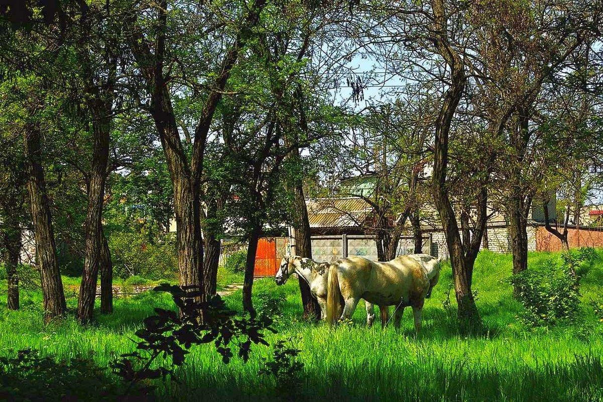лошади в парке - Александр Корчемный