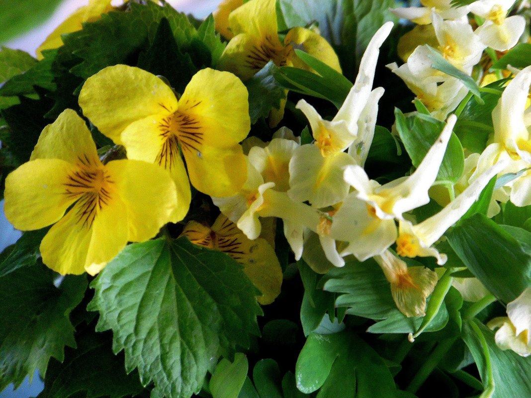 Первые цветы. - nadyasilyuk Вознюк