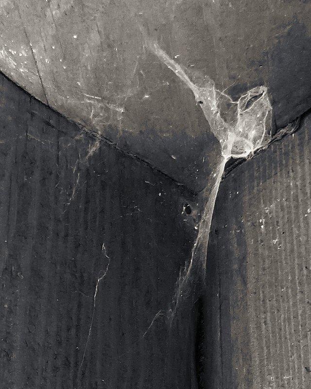 и только паутина в углу - Николай Семёнов