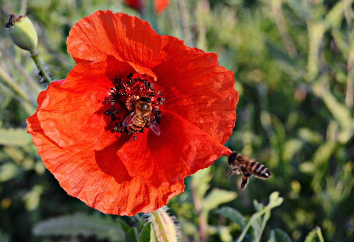 Трудолюбивые пчелы - Валентина