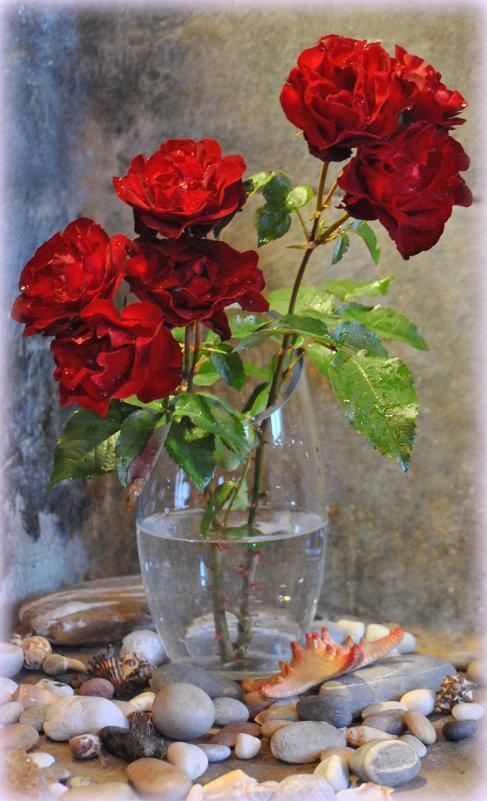 ...сияли розы... - Антонина Мустонен