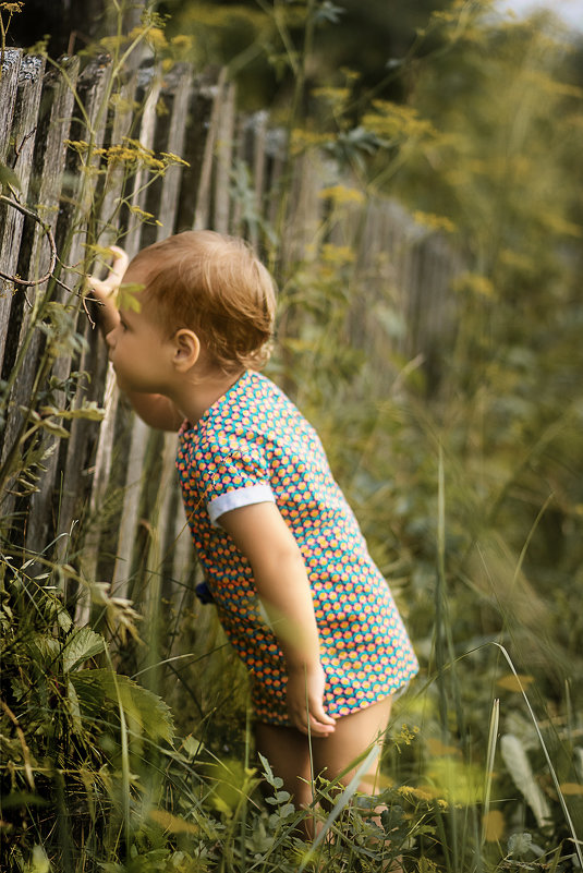 у соседа малина слаще - Евгения кондаурова