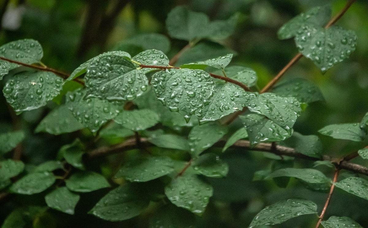После дождя - Наталья Захарова