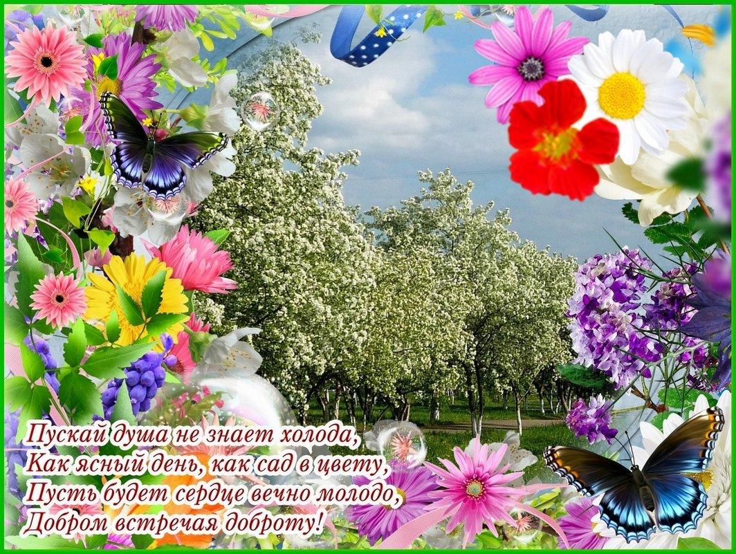 ВСЕМ ХОРОШЕГО ДНЯ ! - VALENTINA NADSON