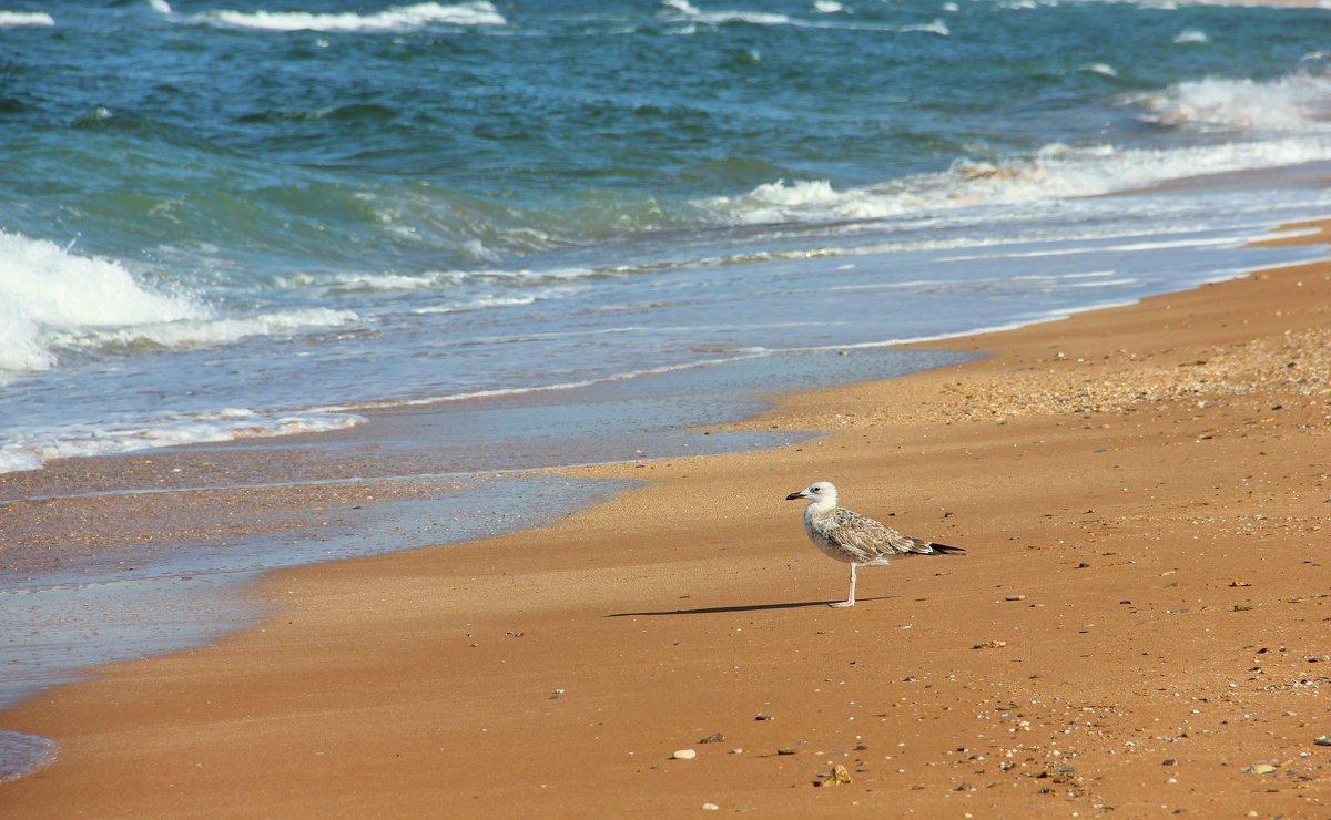 А я одна стою на берегу. - Лариса Исаева