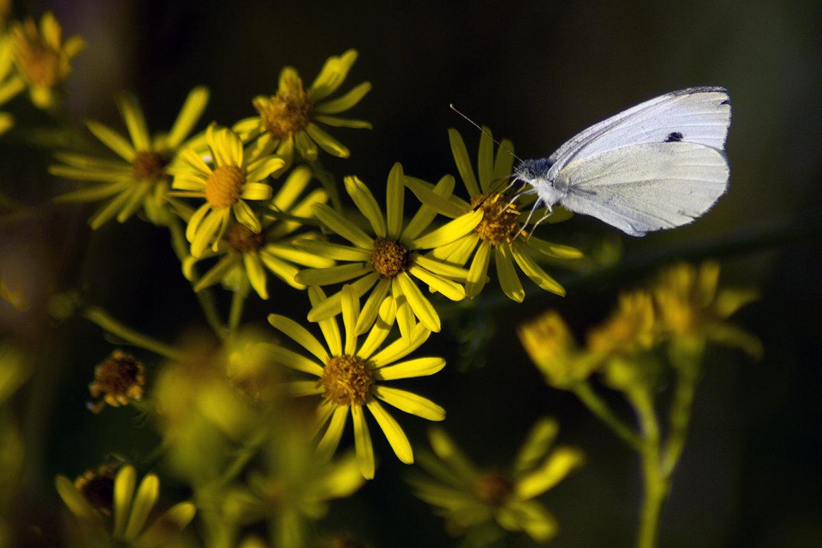 цветы - Геннадий Свистов
