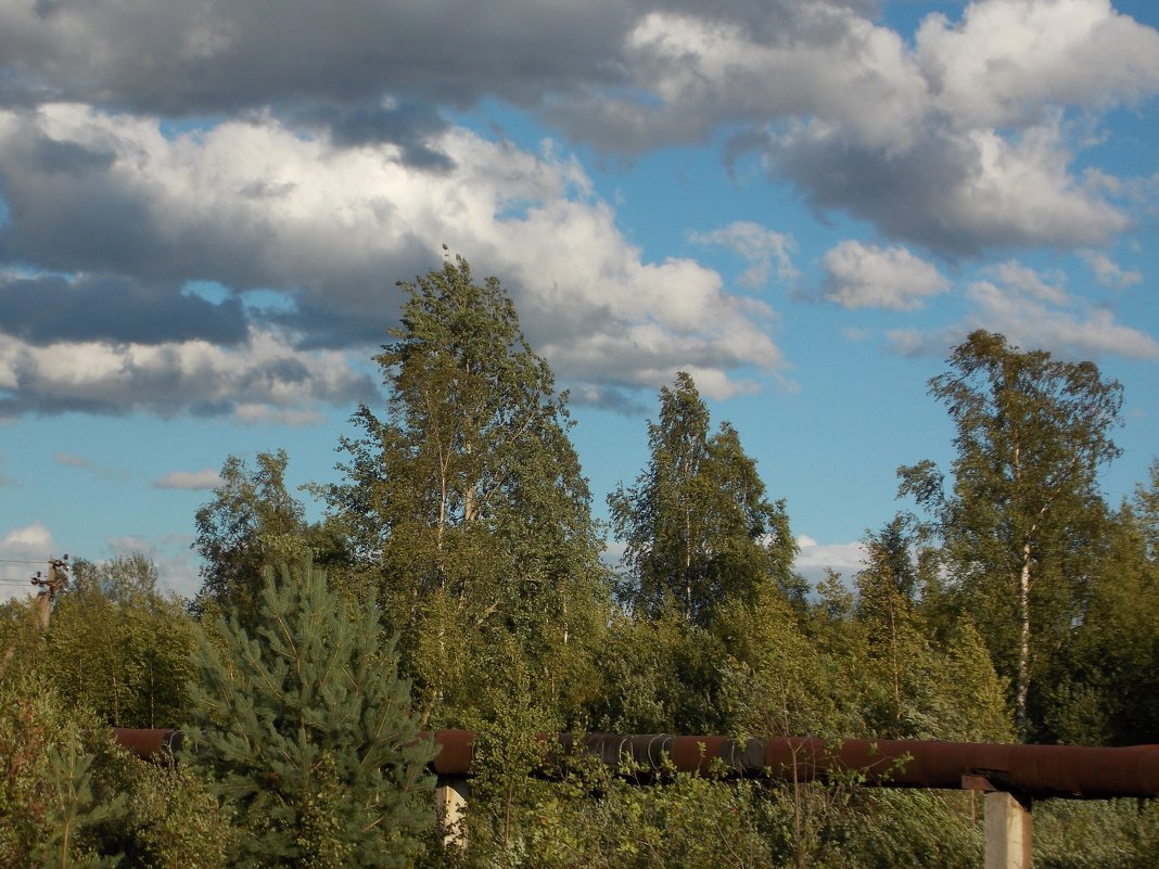 Газопровод у главной дороги - Фотогруппа Весна-Вера,Саша,Натан
