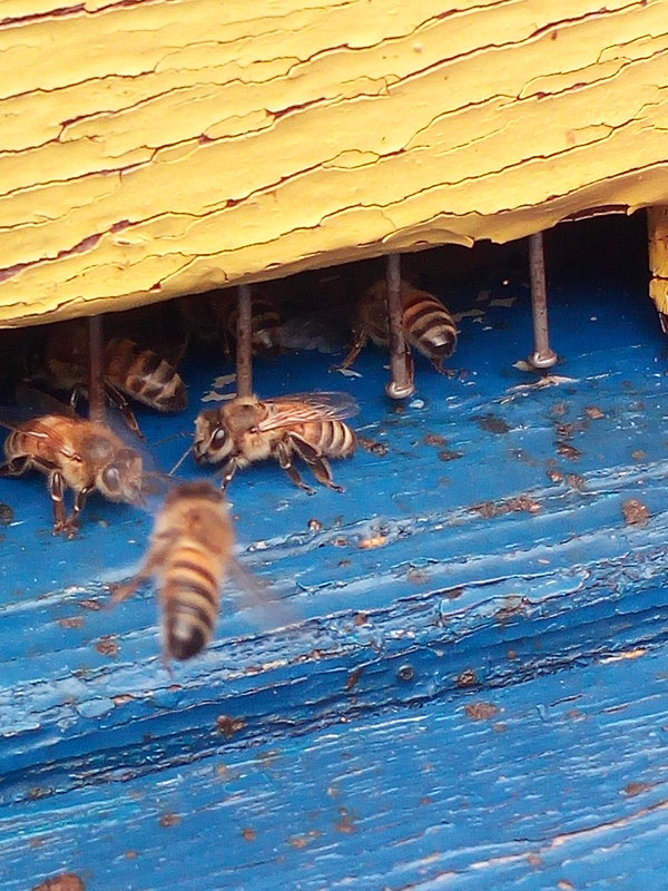Пчелы. - Evgeniy Akhmatov