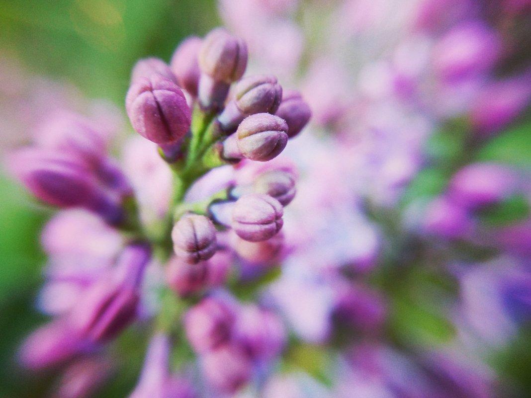 Весенний цвет - Evgeniy Gavrilin