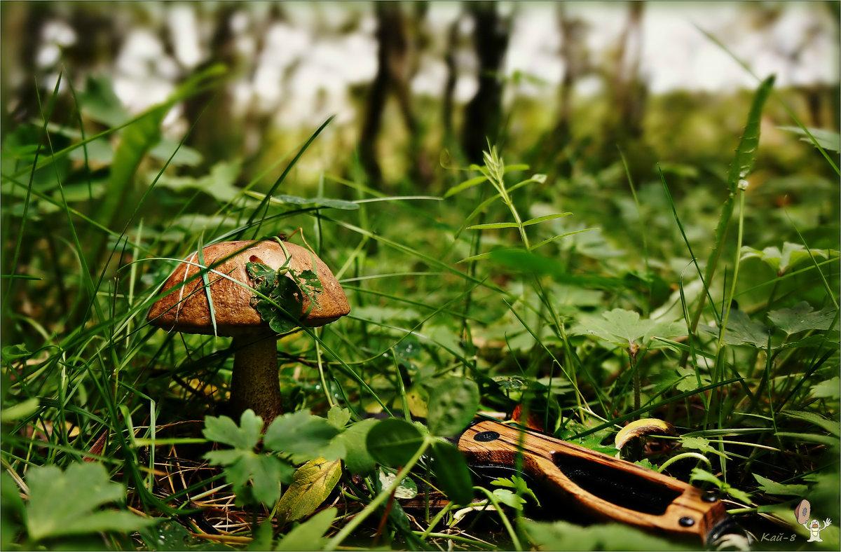 «Коли грибовно - так и хлебовно»... - Кай-8 (Ярослав) Забелин