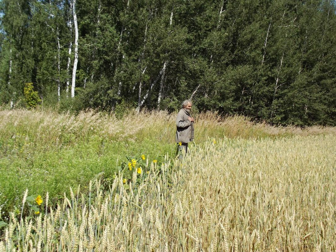 Пшеничное поле - Светлана Рябова-Шатунова