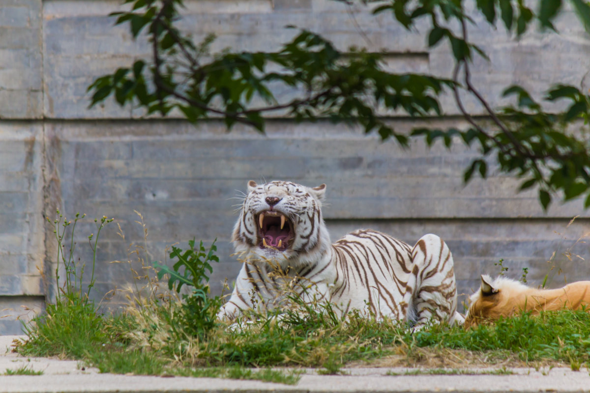 В зоопарке - Andrey Odnolitok