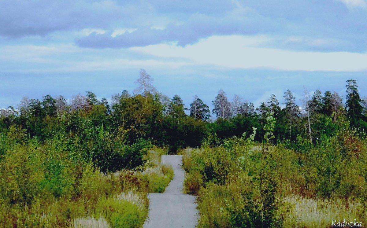 А дорожка в лес ведет - Raduzka (Надежда Веркина)