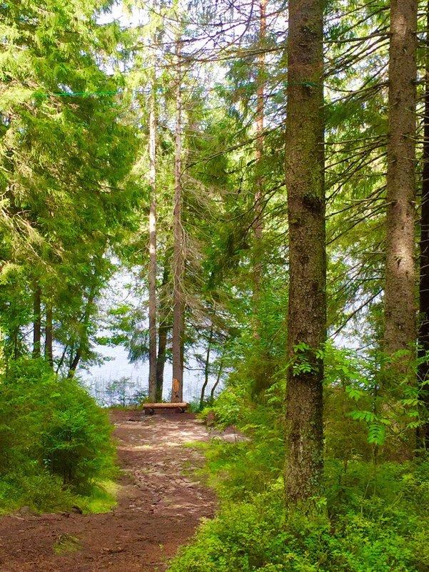 """""""Неразгаданная тайна - в чащах леса... И повсюду тишина - необычайна.  Верю сказке, верю чуду.. - Ирэн"""