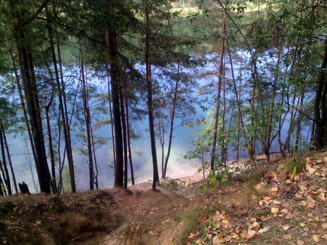 Увиденная красота в лесу вчера 14 сентября 2018 года - Ольга Кривых