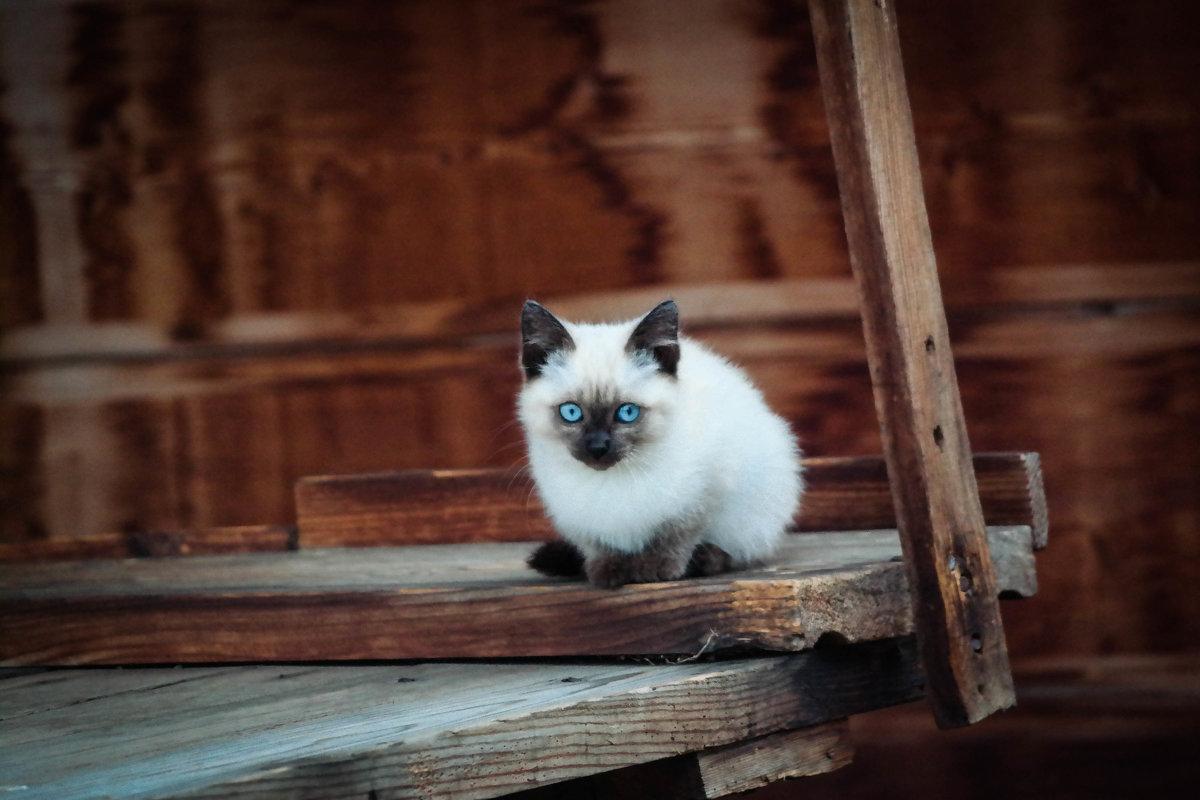 Маленький хозяин большого дома - Евгения Кирильченко