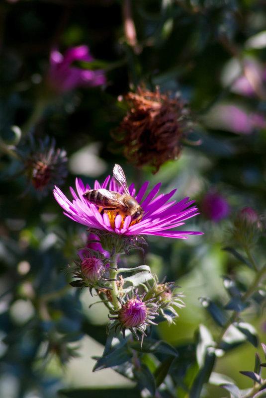 Пчелка труженница - Алена Д