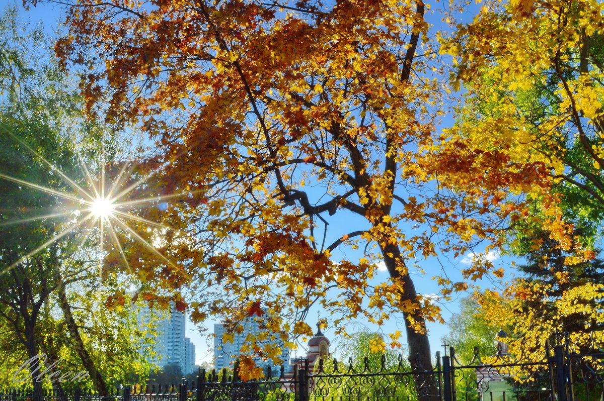 Лучистое солнце октября - Olcen Len