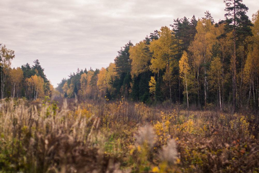 Осень - Сергей Куликов