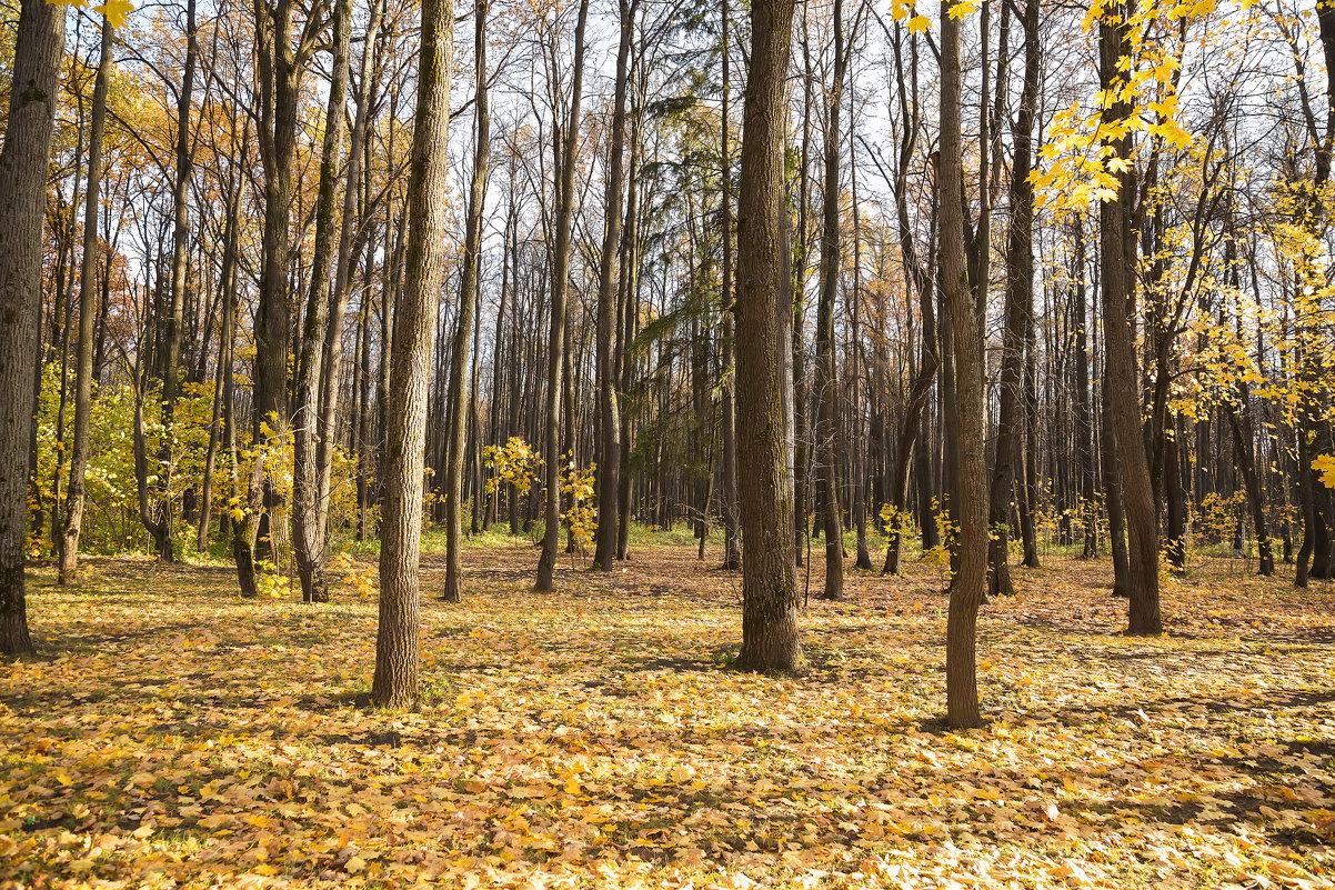 На ковре из желтых листьев.. - Анатолий Грачев
