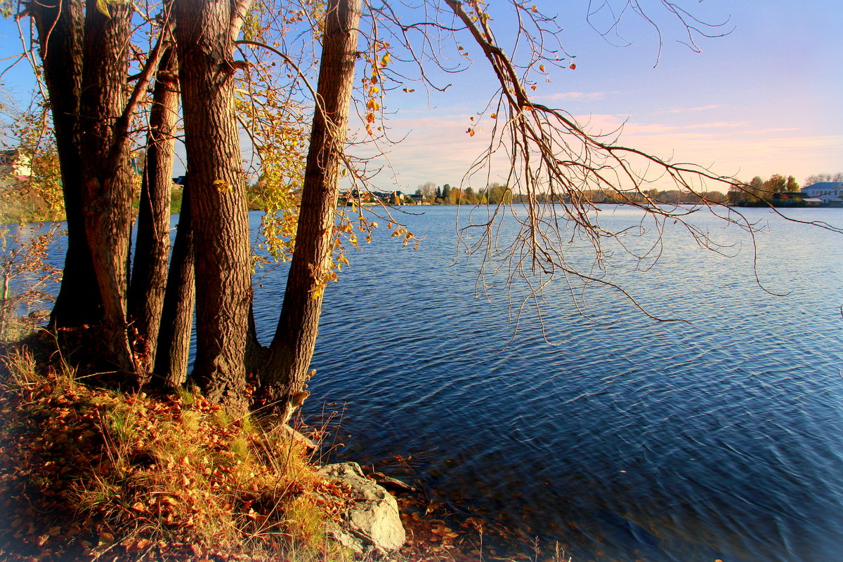 В объятьях озера стареют тополя...