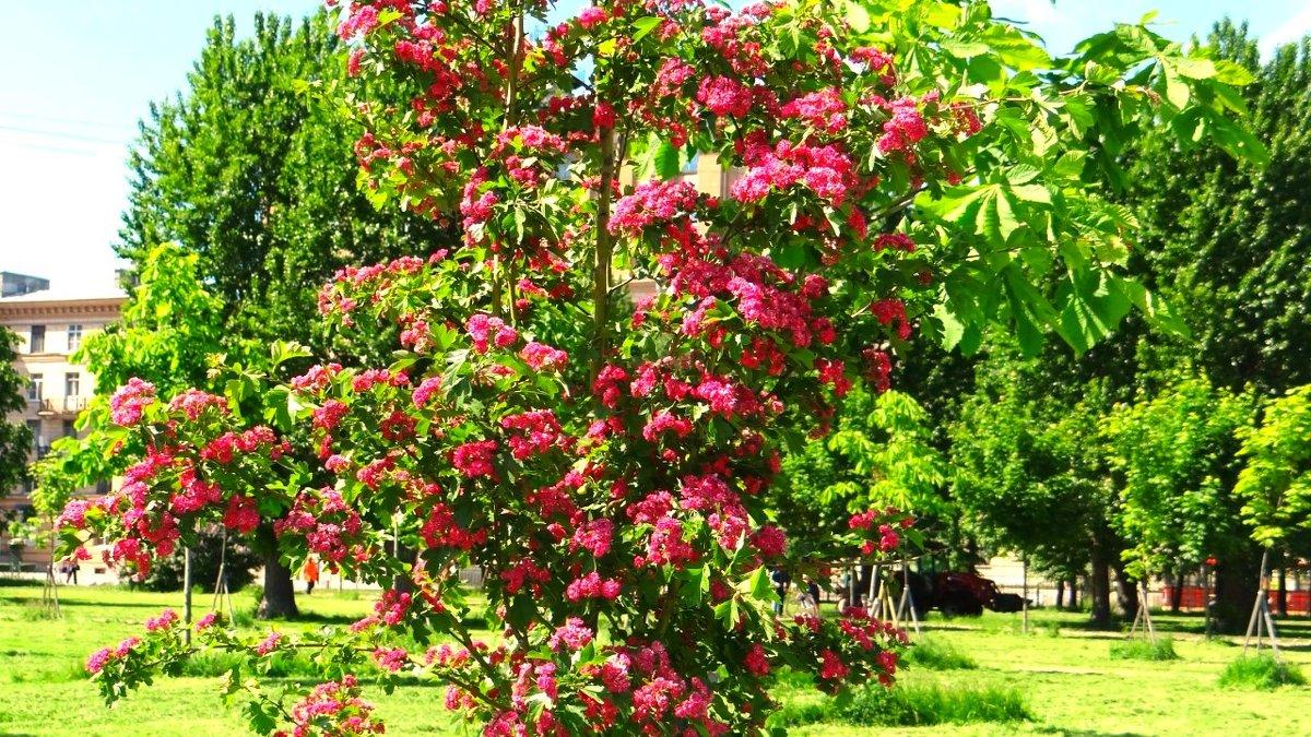 яркие краски лета - Sabina