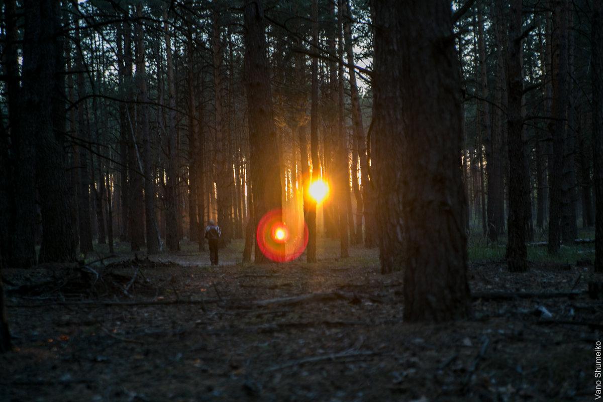 Закат в лесу - Vano Shumeiko