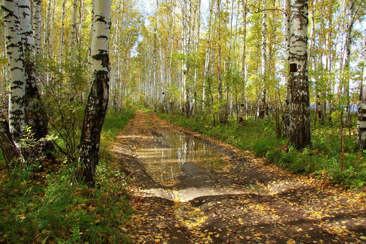 В роще белой догорает осень...