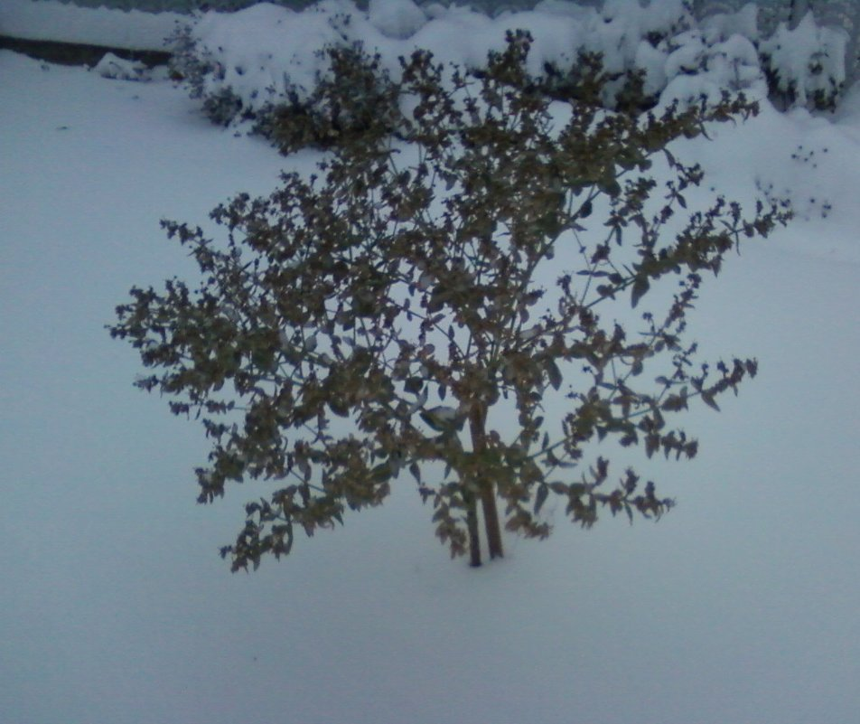 Цветы и снег - Dana